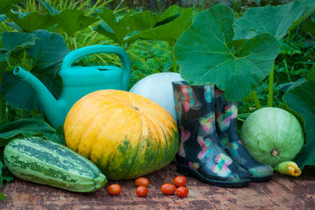 Vegetables. Fresh Ripe Vegetables, Rubber Boots And Watering Can On Old Wooden Table In Garden Outdoors.