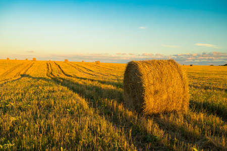 Hay Straw Bale With Shadow On Agricultural Field On Blue Sky At Sunset Or Sunrise. Stock fotó