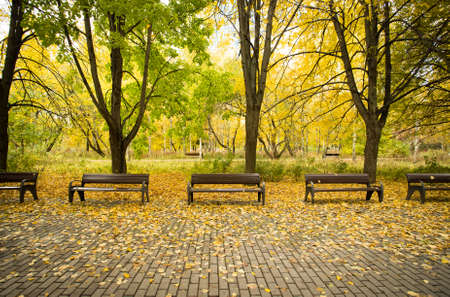 Golden Autumn. Beautiful Bright Colorful Autumn Landscape. Wooden Benches With Trees And Yellow Leaves In Autumn Park Outdoor.