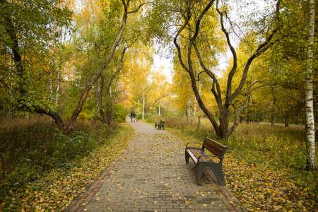 Golden Autumn Landscape. Wooden Bench On Path Tile Road In Autumn Public Park Outdoor.