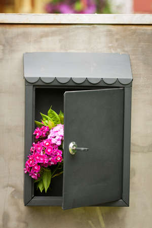 Colorful Flowers Dianthus Barbatus In Iron Mailbox With An Open Door On Gray Metal Door Of Gate At Home Outdoor. Stok Fotoğraf