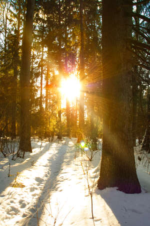 Beautiful Scenic View On Landscape Of Sunset Sun With Natural Sunlight And Sun Rays Through Trees In Forest In Winter.