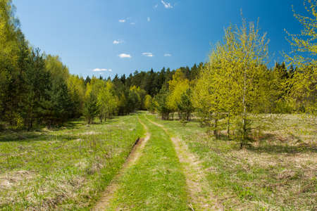 Beautiful Sunny Spring Landscape With Road Path To Forest On Blue Sky With Clouds.