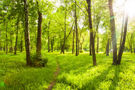 Beautiful Landscape With Fresh Green Grass With Yellow Dandelions, Trees With Green Leaves And With Path Under Brightly Shining Sun In Park In Spring.