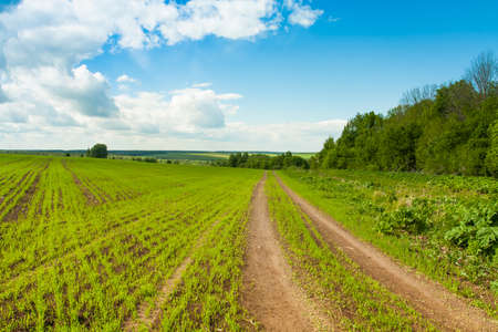 Road Way With Green Wheat On Field Under Blue Sky With Dramatic Clouds In Spring. Beautiful Landscape In Countryside. Imagens