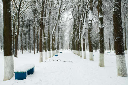 White Snowy Landscape In Winter Park. Park After Heavy Snowfall.