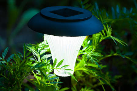 Close Up Of Decorative Solar Lamp Burn In Green Flower Foliage In Garden In Dark Time Of Day.