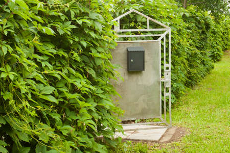 Opened Old Metal Gray Wicket With Mailbox And Plants Leaves Of Virginia Creeper (Parthenocissus Quinquefolia) Covered Fences Summer Outdoors. Фото со стока