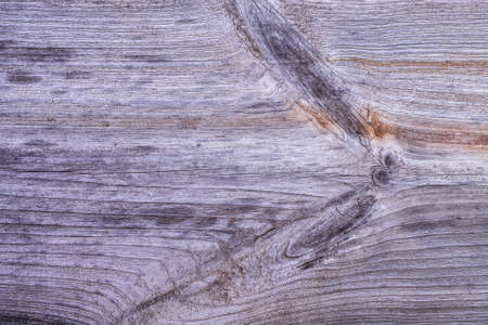 Abstract Gray Background Of Wooden Old Dry Tree Top View.