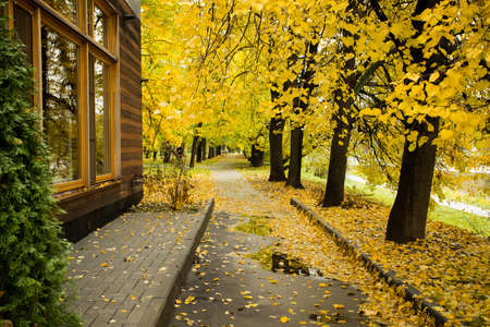 Asphalt Road Of Sidewalk Path In Park In Dense Trees Of Linden With Golden Leaves And With Wooden House In Autumn. Imagens