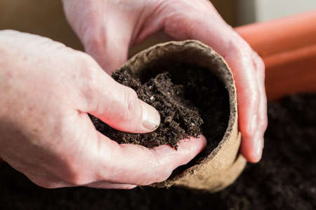 Hands Farmer Holding Peat Pot With Ground Close Up. Seasonal Spring Planting Of Vegetable Seeds Or Flowers.