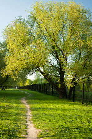 Fresno de árbol grande con camino en día soleado en el parque en primavera. Foto de archivo