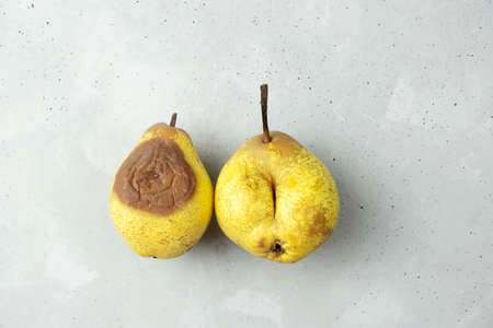 Trendy organic bio-ugly pears lie on a gray concrete background. There is no ugly food. all food is beautiful. No waste. Stop the release of products.