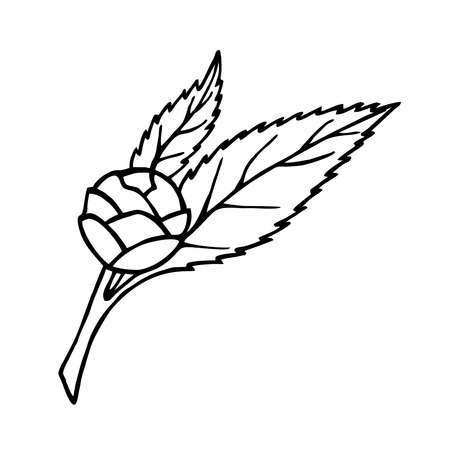 CAMELLIA TWIG WITH FLOWERS AND LEAVES ON A WHITE BACKGROUND IN VECTOR