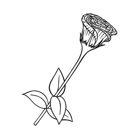 BLOOMING EUSTOMA ON A WHITE BACKGROUND IN THE VECTOR