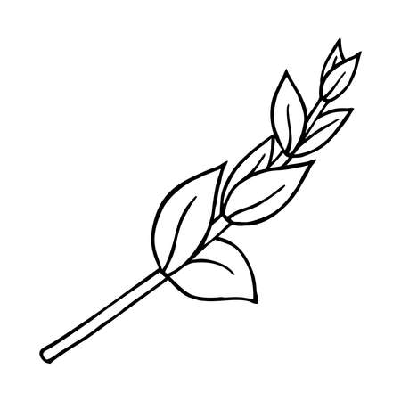 SPRIG OF GENTIAN IN A WHITE BACKGROUND IN VECTOR