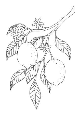 COLORING WITH LEMONS ON A BRANCH ON A WHITE BACKGROUND IN VECTOR