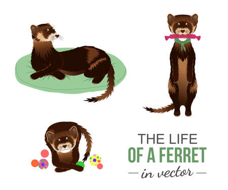 BROWN FERRETS WITH THEIR TOYS IN VECTOR Illustration