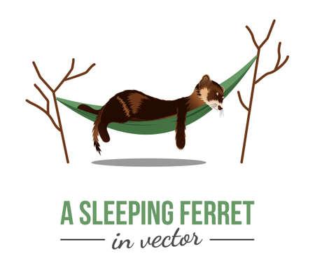 SLEEPING BROWN FERRET IN A GREEN HAMMOCK IN VECTOR Standard-Bild - 149899236