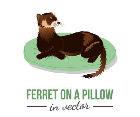 BROWN FERRET ON A GREEN PILLOW IN VECTOR