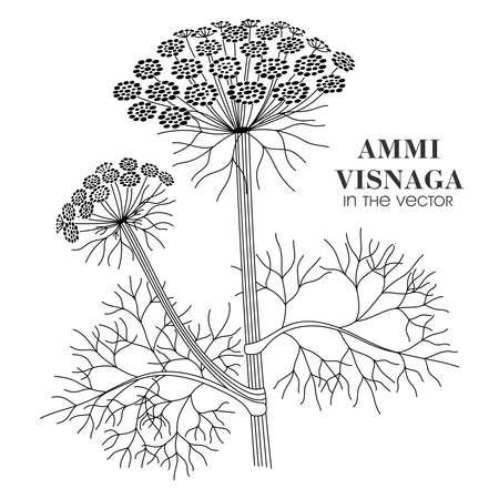 Medicinal plant Ammi Visnaga on a white background in vector Stock Illustratie
