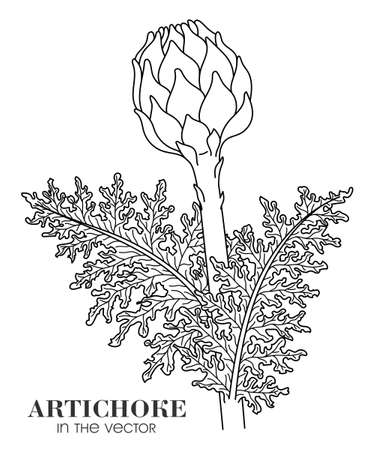 LINEAR DRAWING OF AN ARTICHOKE ON A WHITE BACKGROUND IN A VECTOR Stock Illustratie