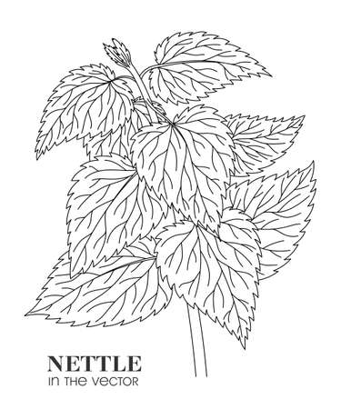 LINEAR DRAWING OF NETTLES ON A WHITE BACKGROUND IN A VECTOR