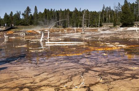arboles secos: Paisaje con árboles muertos, reflejo en el agua, vapor, cielo azul en el parque nacional de Yellowstone, WY, EE.UU.