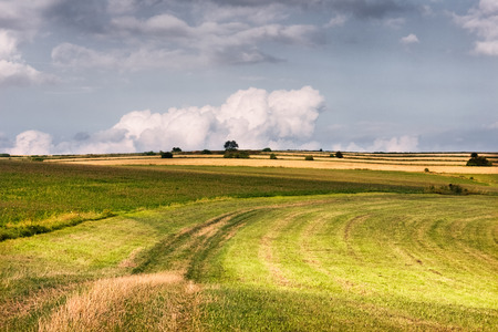 Rural pastoral landscape with green grass fields and white clouds sky. ?ountryside landscape. Summer sunny day.