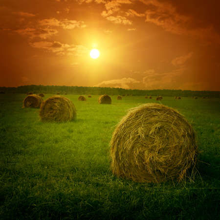 hay bales: Field with hay bales at twilight.