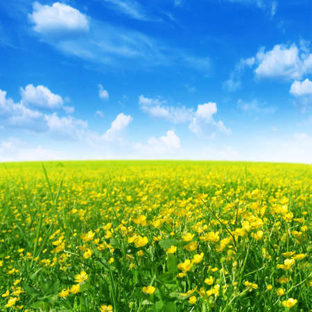 Spring flower field and blue sky. photo