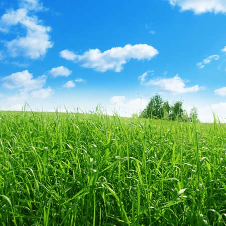 Green grass meadow on summer day. photo