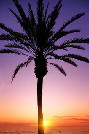Silhouette of palm tree and colorful sunset. Stock Photo
