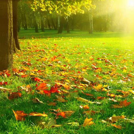Sunny day in autumn park.