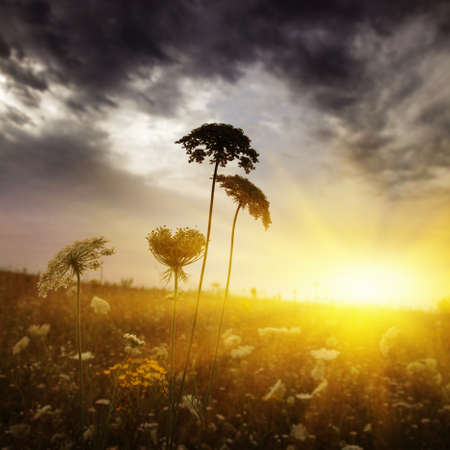 野草: 嵐雲のミステリーと野生草のフィールドです。