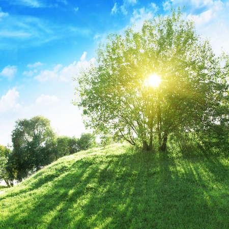 Sun shining through tree.