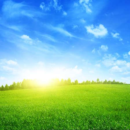 sunshine: Paisaje soleado de verano.
