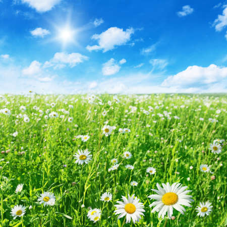 Green field with daisies and blue sky with sun. Stock Photo - 11646091