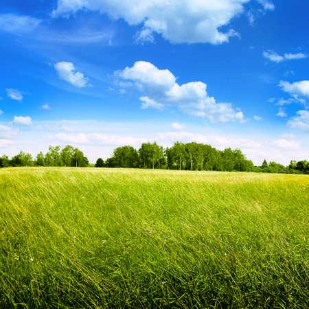 Gebied van de zomer gras en heldere blauwe hemel.