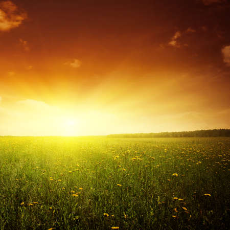 field flower: Beautiful sunset and flower field. Stock Photo