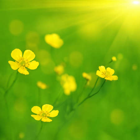 Yellow wildflowers and sun. Stock Photo - 11646051