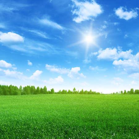 dia soleado: Campo de hierba, cielo azul y el sol.