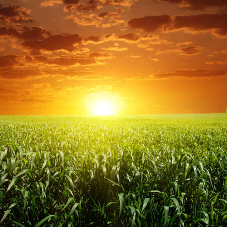 Green field and sunset.  Stock Photo