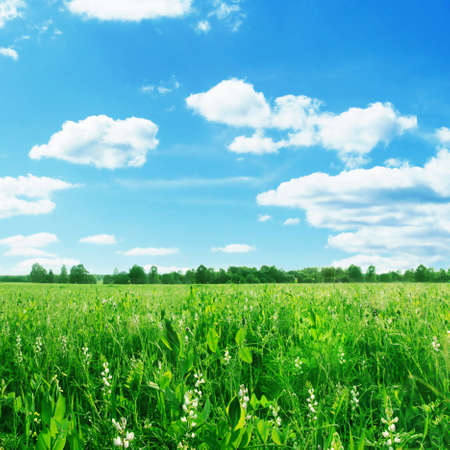 Agricultural field on summer day. Stock Photo