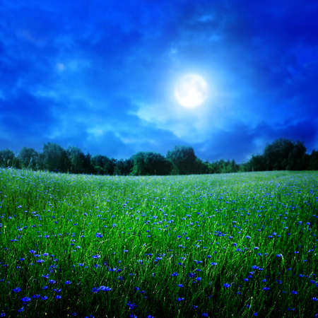 Cornflower field under moon light. Stock Photo