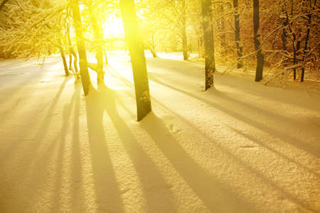 non urban: Trees at sunset in winter time.