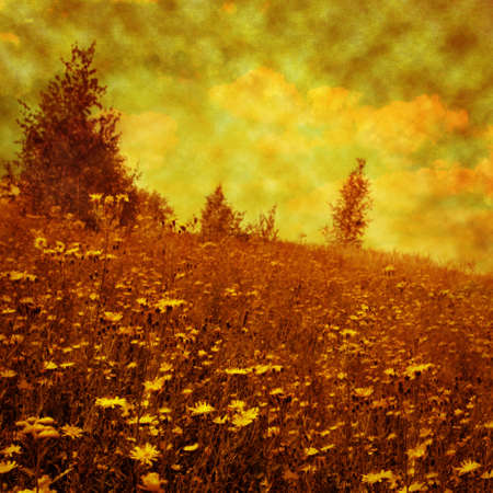 Wildflower field under sky in grunge style. photo