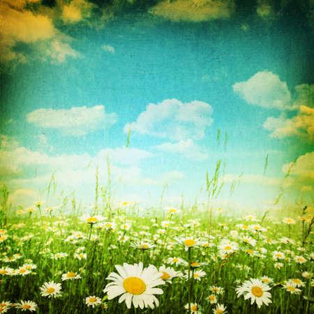 Flower field under blue sky in grunge style. Stock Photo