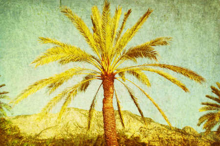 Palm tree in grunge and retro style. photo