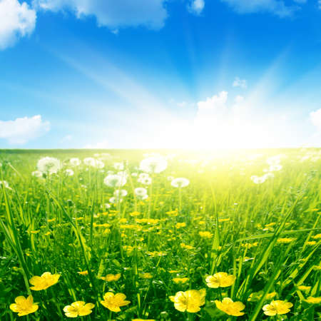 Spring flower field and bright sunlight. Stock Photo